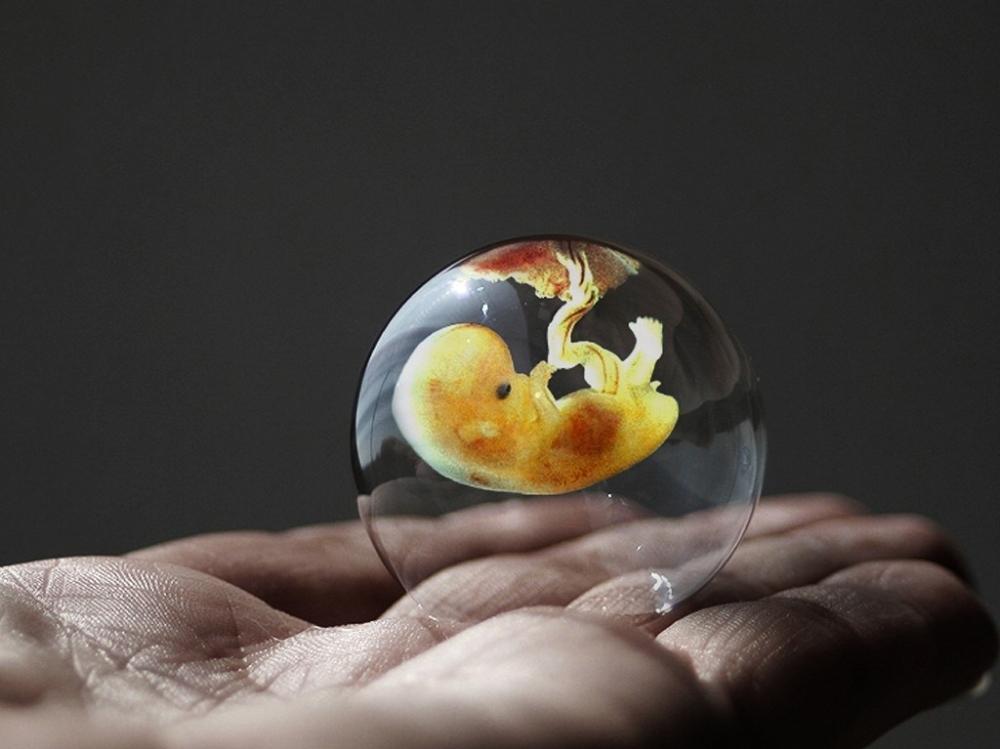 a_gift_embryo.jpg